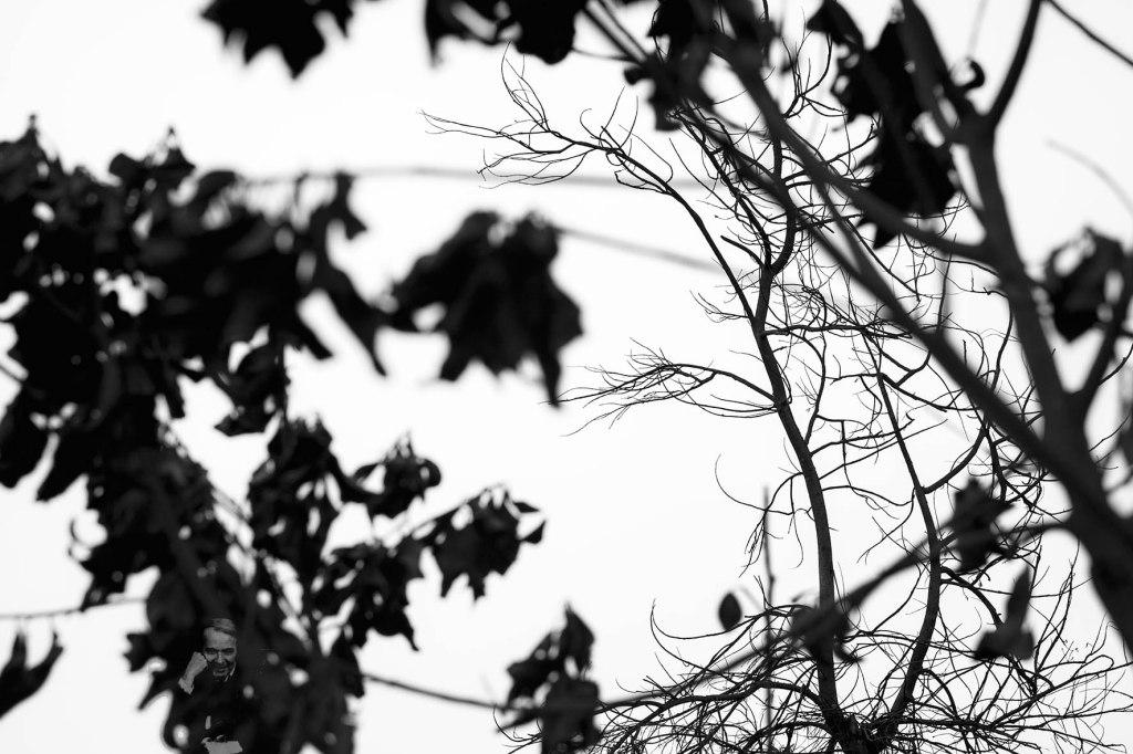 Sumilla de Entre árboles y rizomas. Retrato de una filosofía pop(ular)